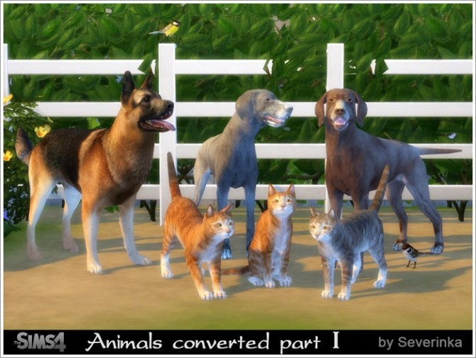 Animals converted part I at Sims by Severinka image 847 670x505 Sims 4 Updates
