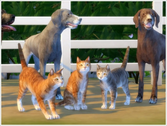 Sims 4 Animals converted part I at Sims by Severinka