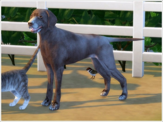 Animals converted part I at Sims by Severinka image 877 670x505 Sims 4 Updates
