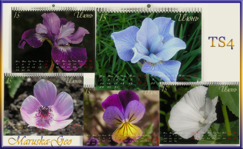 Sims 4 Calendar for June at Maruska Geo