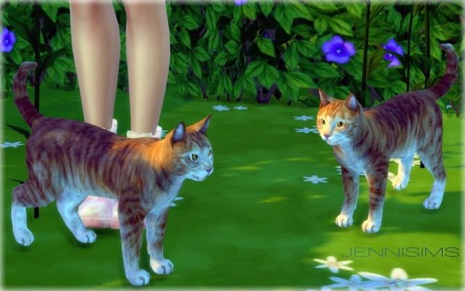 Decoration Minion and Cat at Jenni Sims image 9618 670x419 Sims 4 Updates