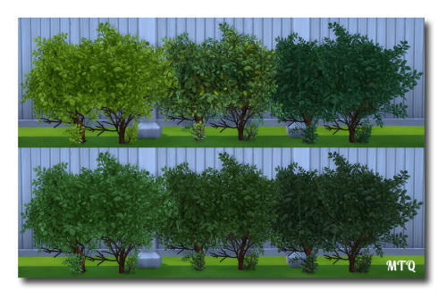 Sims 4 TS2 To TS4 Outdoor Plants at Msteaqueen