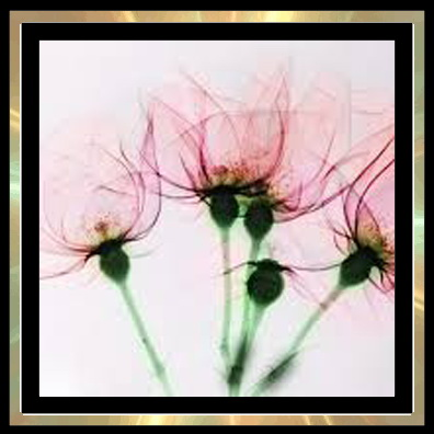 Sims 4 xray flower paintings at Trudie55