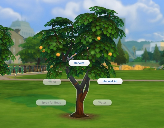Harvestable Orange Tree By Plasticbox At Tsr 187 Sims 4 Updates