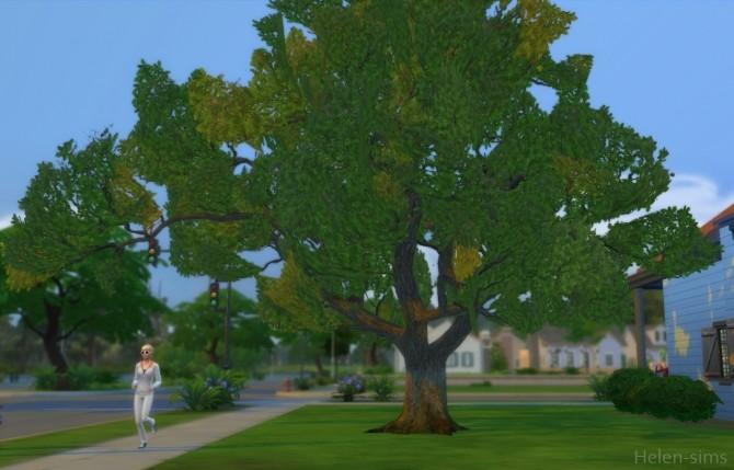Sims 4 Oak tree at Helen Sims