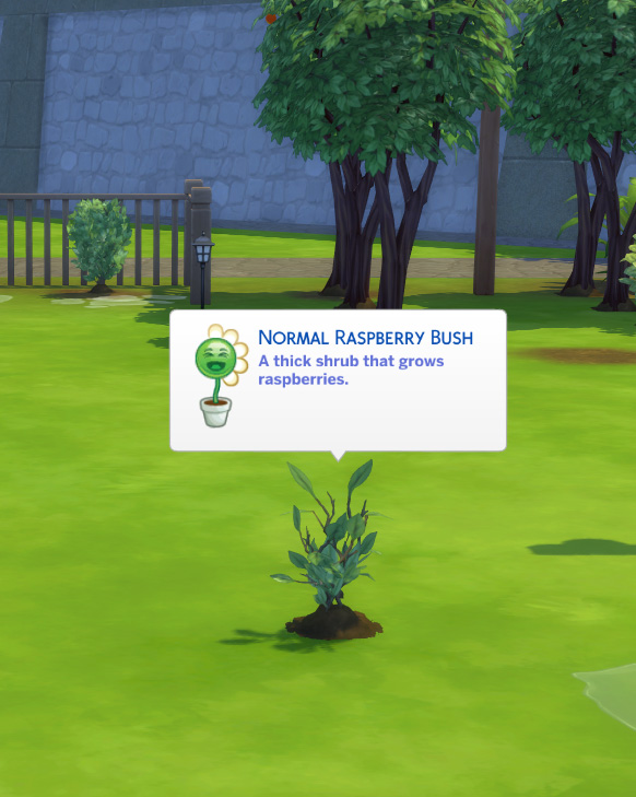 Harvestable Raspberry Plant by icemunmun at Mod The Sims image 5210 Sims 4 Updates