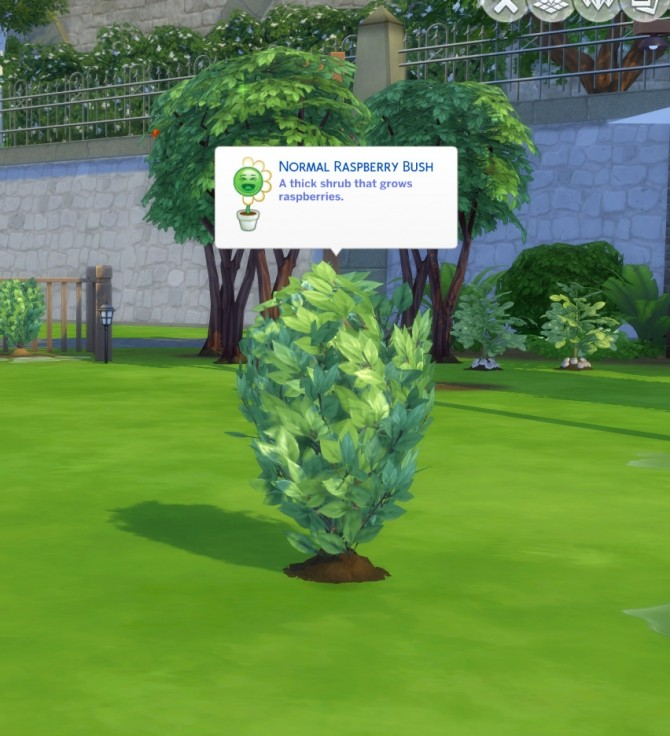 Harvestable Raspberry Plant by icemunmun at Mod The Sims image 539 670x736 Sims 4 Updates