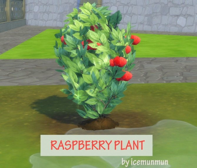 Harvestable raspberry plant by icemunmun at mod the sims for Indoor gardening sims 4