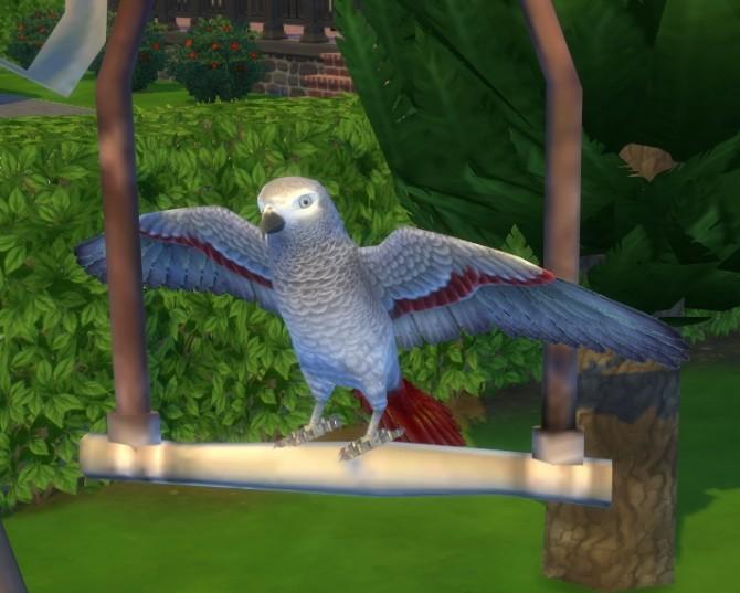 Sims 4 CS Tropical Bird by BigUglyHag at SimsWorkshop