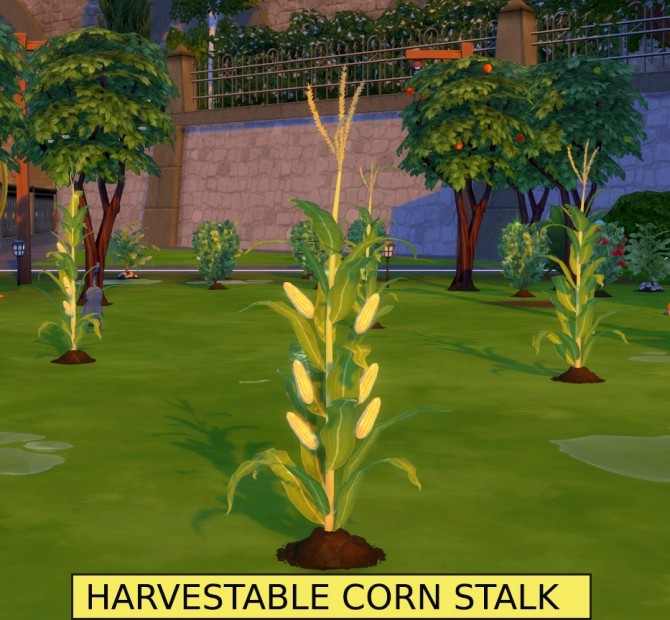 Harvestable Corn Stalk + Optional Popcorn Popper by icemunmun at Mod The Sims image 853 670x620 Sims 4 Updates