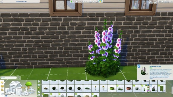 Sims 4 Hollyhocks in new colors by Nuttchi at Mod The Sims