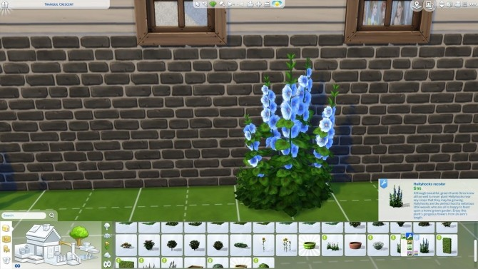Hollyhocks in new colors by Nuttchi at Mod The Sims image 1132 670x377 Sims 4 Updates
