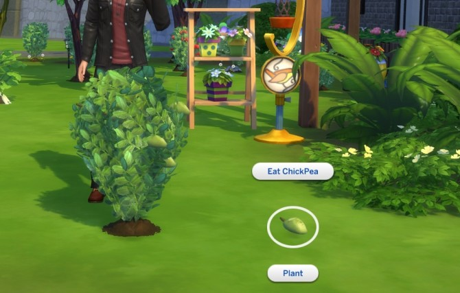 Custom Harvestable ChickPea by icemunmun at Mod The Sims image 1696 670x427 Sims 4 Updates