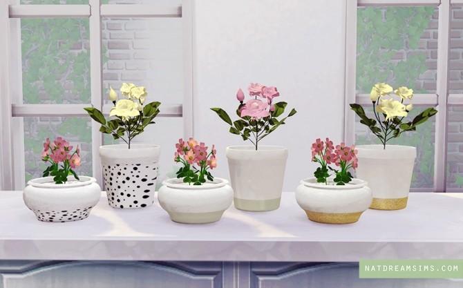 Cute Jars at Nat Dream Sims image 547 670x417 Sims 4 Updates