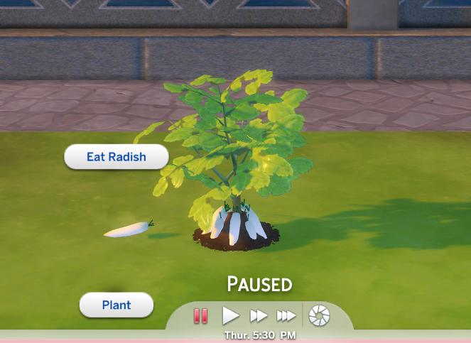Custom Harvestable Radish/Daikon by icemunmun at Mod The Sims image 941 Sims 4 Updates