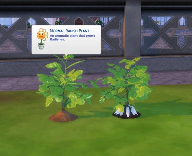 Custom Harvestable Radish/Daikon by icemunmun at Mod The Sims image 951 670x545 Sims 4 Updates
