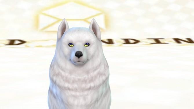 Shadows Pet Eyes HALVES by ShadowEatsSkittlez at SimsWorkshop image 1078 670x377 Sims 4 Updates