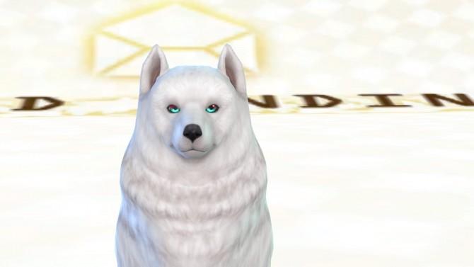 Shadows Pet Eyes HALVES by ShadowEatsSkittlez at SimsWorkshop image 1088 670x377 Sims 4 Updates