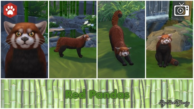 Sims 4 Red Panda (Cat) by Bakie at Mod The Sims