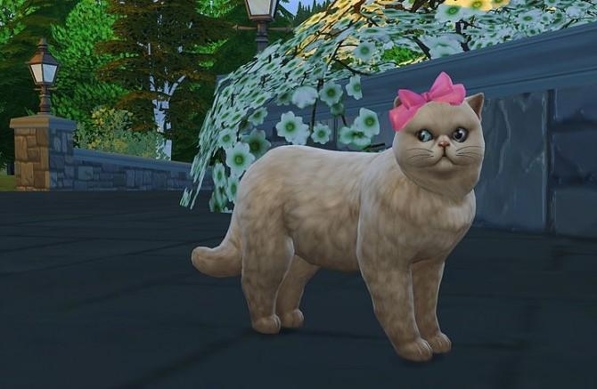 Sims 4 Cat head bow at Studio K Creation