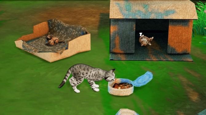 Sims 4 HOMELESS PET SET by Thiago Mitchell at REDHEADSIMS