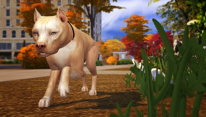 Four legged Life POSEPACK at Solistair image 10217 670x381 Sims 4 Updates