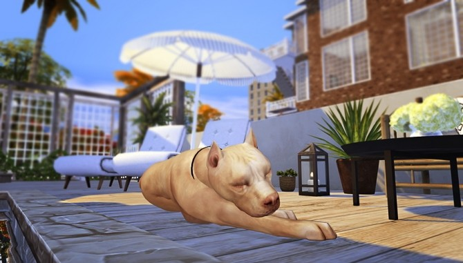 Four legged Life POSEPACK at Solistair image 10315 670x381 Sims 4 Updates