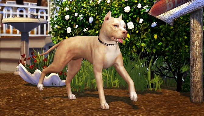 Four legged Life POSEPACK at Solistair image 10416 670x381 Sims 4 Updates