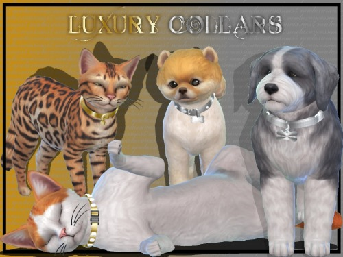 LUXURY PET COLLARS at NEW Luxurious Sims 4 image 2154 Sims 4 Updates
