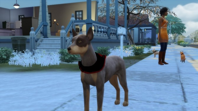 Australian Cattle Dog by Sterling Archer at Mod The Sims image 150 670x377 Sims 4 Updates