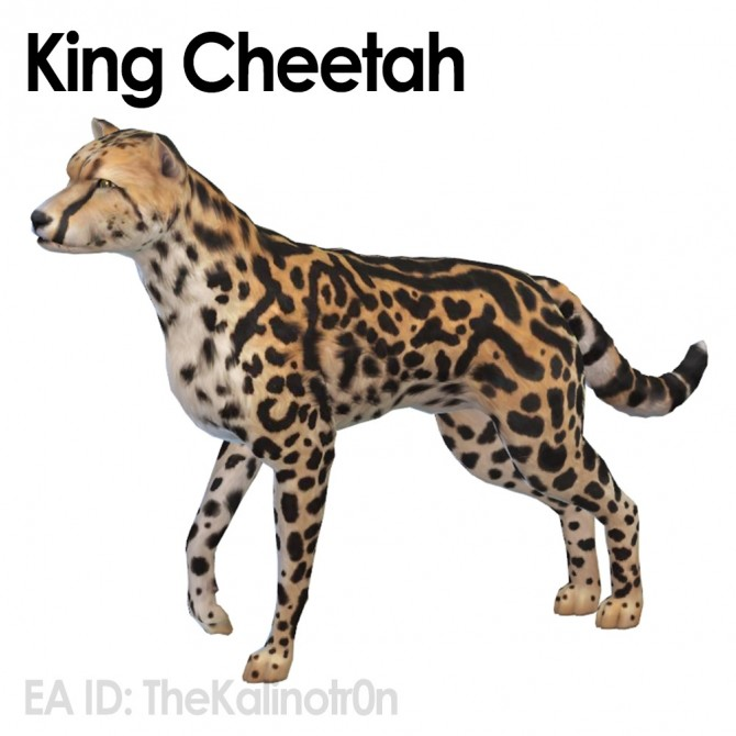 Sims 4 King Cheetah, Lynx (cat), meerkat and red fox at Kalino