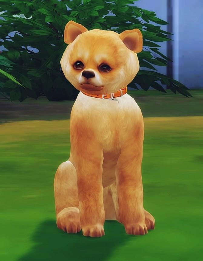 Cute little dog at Dreadan simblr image 2082 670x858 Sims 4 Updates