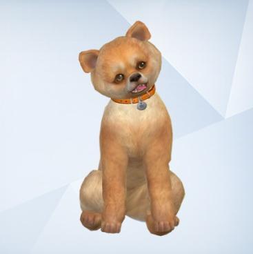 Cute little dog at Dreadan simblr image 2102 Sims 4 Updates