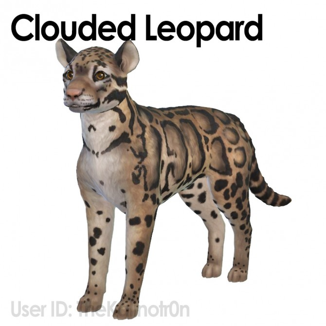 Clouded Leopard, Zebra, Boar and Guinea Pig at Kalino image 525 670x670 Sims 4 Updates