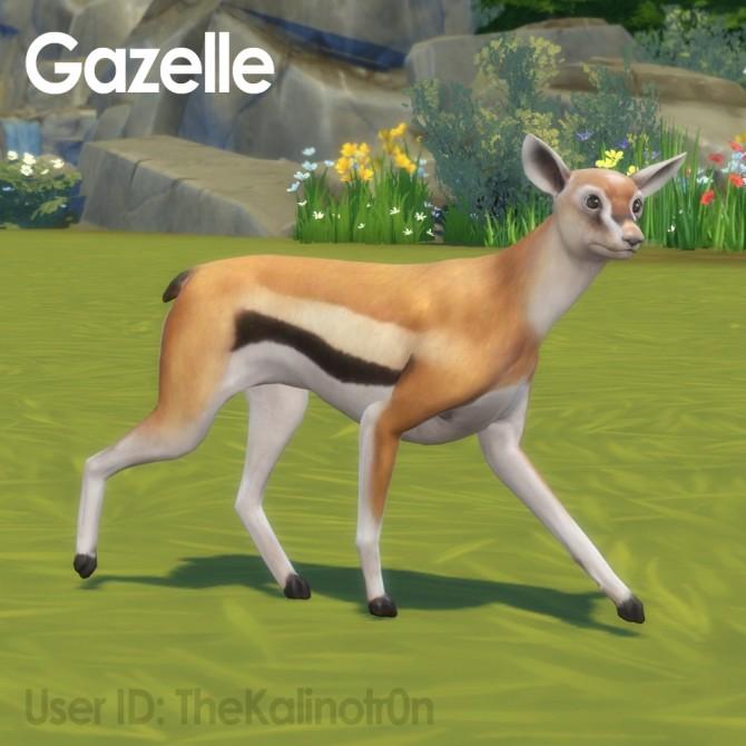 Brown Calf, Gazelle and Koala at Kalino image 636 670x670 Sims 4 Updates