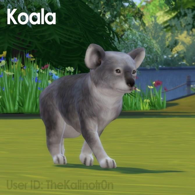 Brown Calf, Gazelle and Koala at Kalino image 646 670x670 Sims 4 Updates