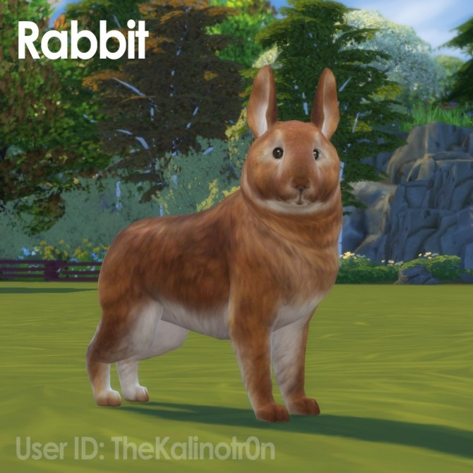 Sims 4 Chinchilla and Rabbit at Kalino