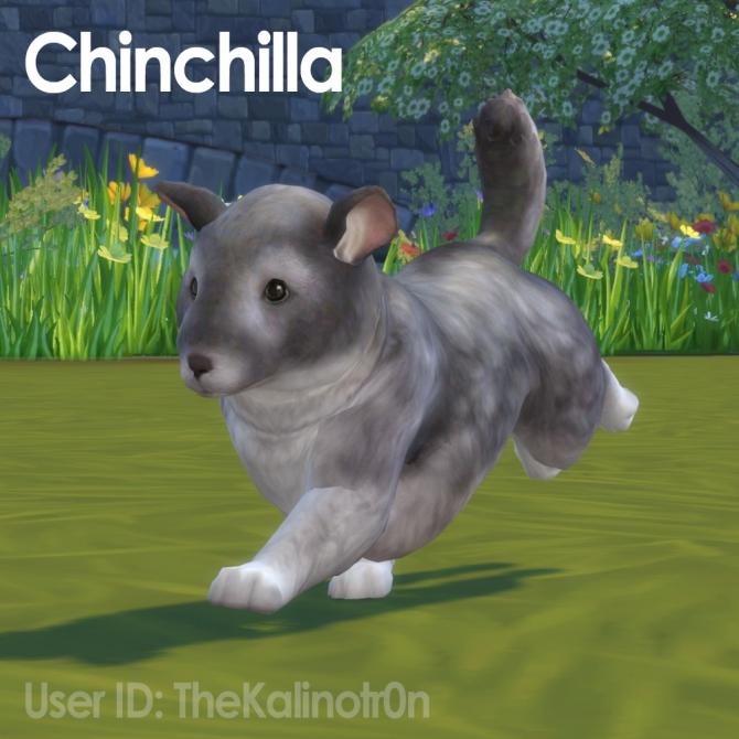 Sims 4 Chinchilla Downloads 187 Sims 4 Updates