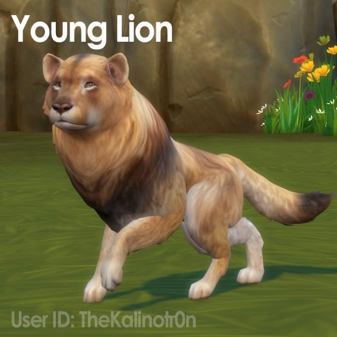Sims 4 Young Lion, Calf, Skunk and Raccoon at Kalino