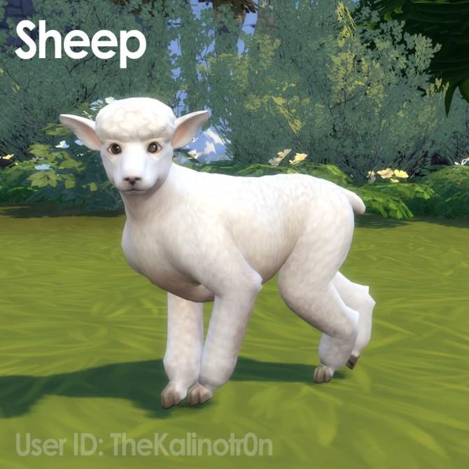 Sims 4 Llama, Suffolk Sheep, Sheep and Goat at Kalino