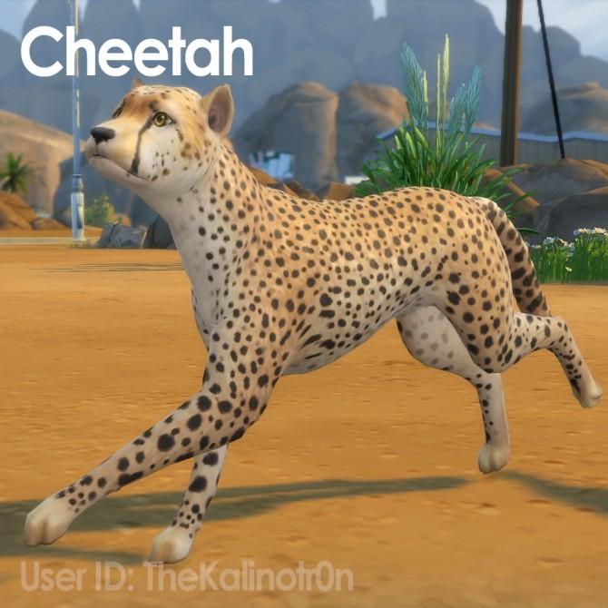 Cheetah, Desert Fox, Jackal, Red Panda, Lion, Bear, Polar Bear, Badger and Tiger at Kalino image 886 670x670 Sims 4 Updates
