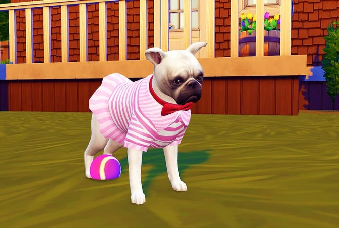Small dog dress N1 at Studio K Creation image 9010 670x451 Sims 4 Updates