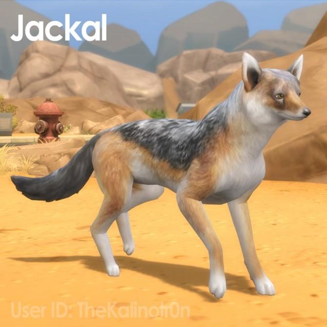 Cheetah, Desert Fox, Jackal, Red Panda, Lion, Bear, Polar Bear, Badger and Tiger at Kalino image 906 670x670 Sims 4 Updates