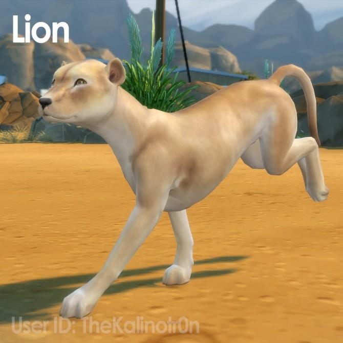 Cheetah, Desert Fox, Jackal, Red Panda, Lion, Bear, Polar Bear, Badger and Tiger at Kalino image 926 670x670 Sims 4 Updates