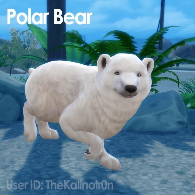 Cheetah, Desert Fox, Jackal, Red Panda, Lion, Bear, Polar Bear, Badger and Tiger at Kalino image 946 670x670 Sims 4 Updates
