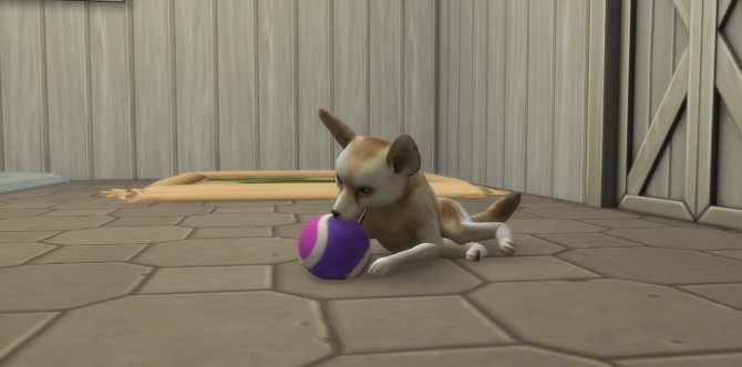 Sims 4 Panda, Badger and Desert Fox at Kalino
