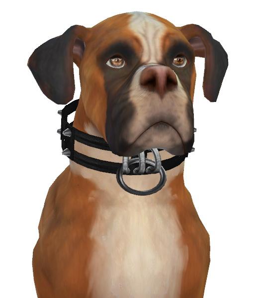 Kona the Boxer Dog at Enchanting Essence image 10116 Sims 4 Updates
