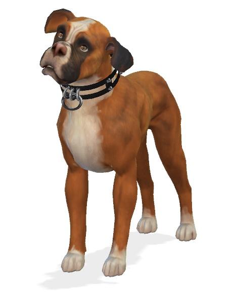 Sims 4 Kona the Boxer Dog at Enchanting Essence