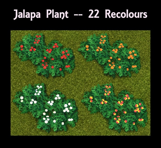 Jalapa Plant 22 Recolours by Simmiller at Mod The Sims image 11018 670x613 Sims 4 Updates