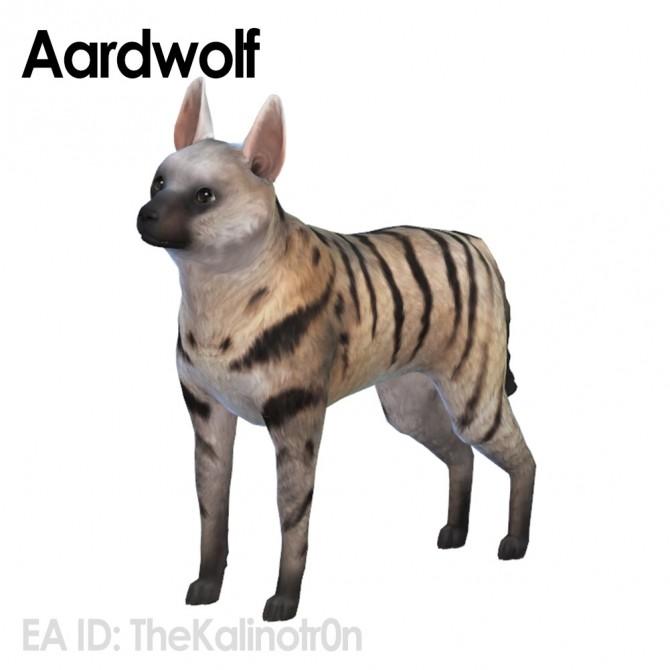 Ferret, Aardwolf, African Wild Dog and Hyena at Kalino image 6521 670x670 Sims 4 Updates
